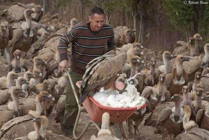 Alimentando a los buitres