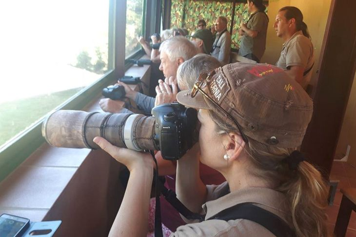 Tomando fotos de los buitres en Valderrobres