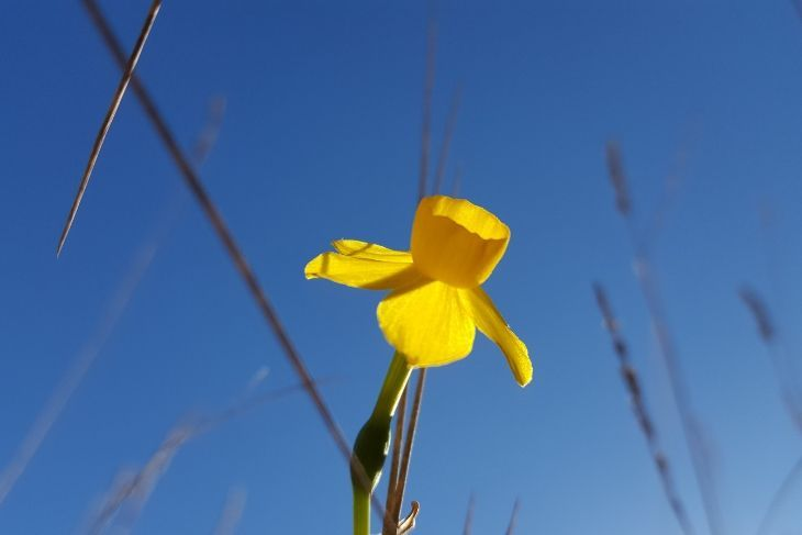 Flora del Bajo Martín